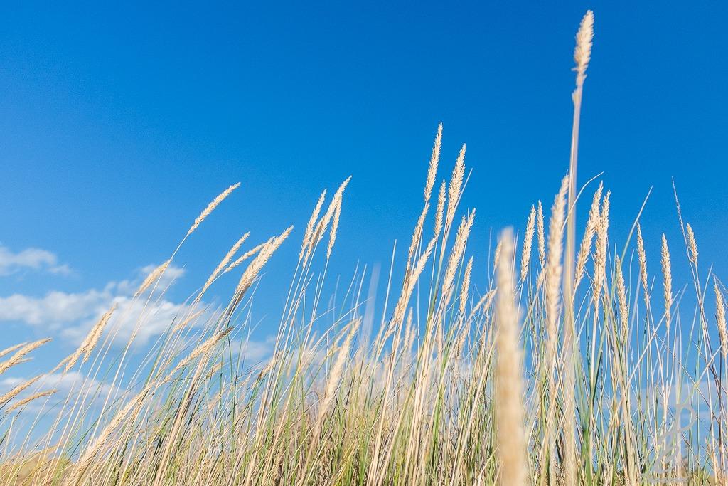 photographie, vent, ciel, joli, l'instant présent, instant présent, instant present apprendre l'instant présent