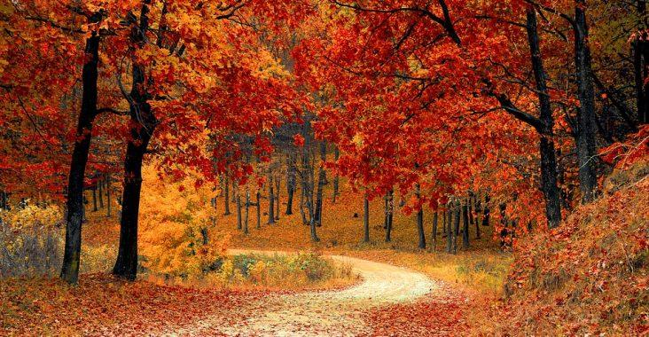photographier en automne