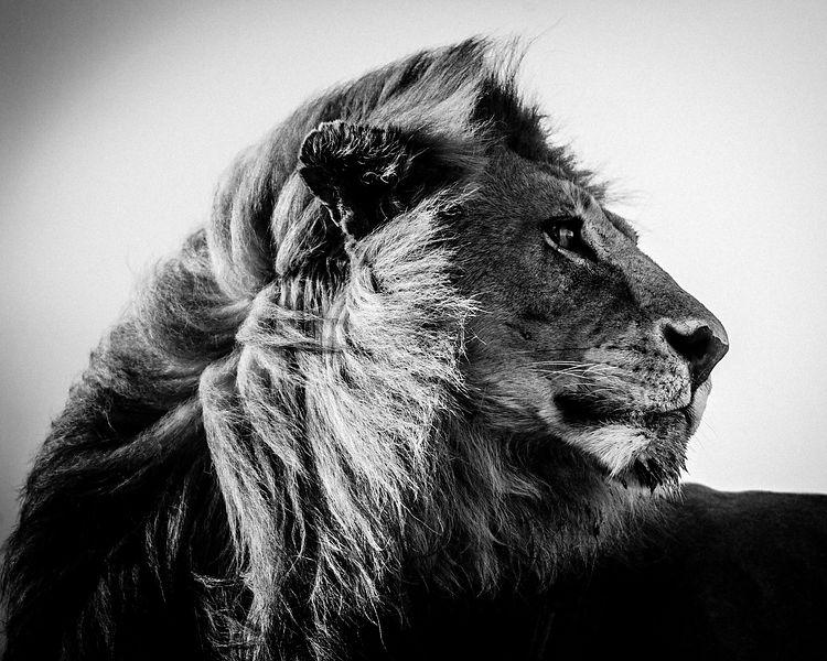 photographie animalière